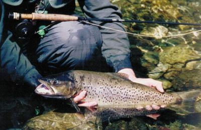 guided-new-zealand-trips-trout-fishing.jpg