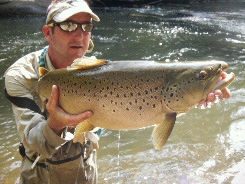 Wild Brown Trout From The Lower Nantahala River
