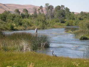silver-creek-idaho-fly-fishing-guided-wade-trip.jpg