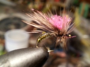 crown-caddis-charlie-craven-delayed-harvest-tuckasegee.jpg