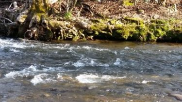 deep-creek-fly-fishing-report.jpg