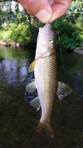 chub-deep-creek-bryson-fishing.jpg