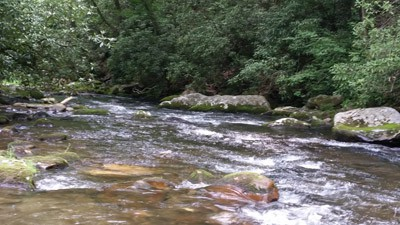 smokies-pocket-water.jpg