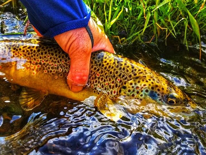 destination-trips-brown-trout