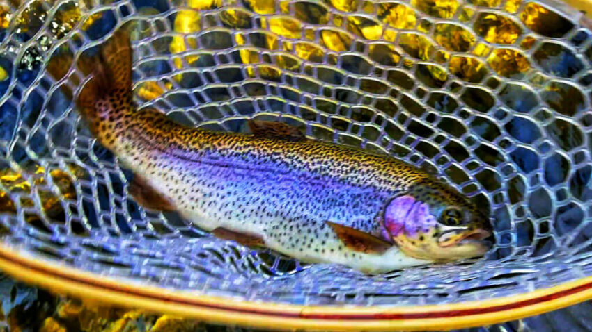 about-blog-mac-brown-fly-fish
