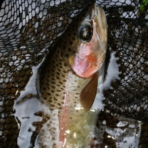 corporate-groups-fly-fishing